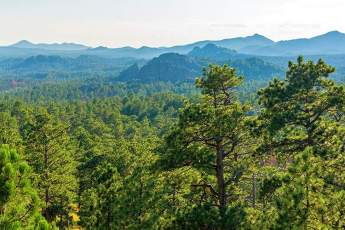 Photo of the Black Hills National Forest